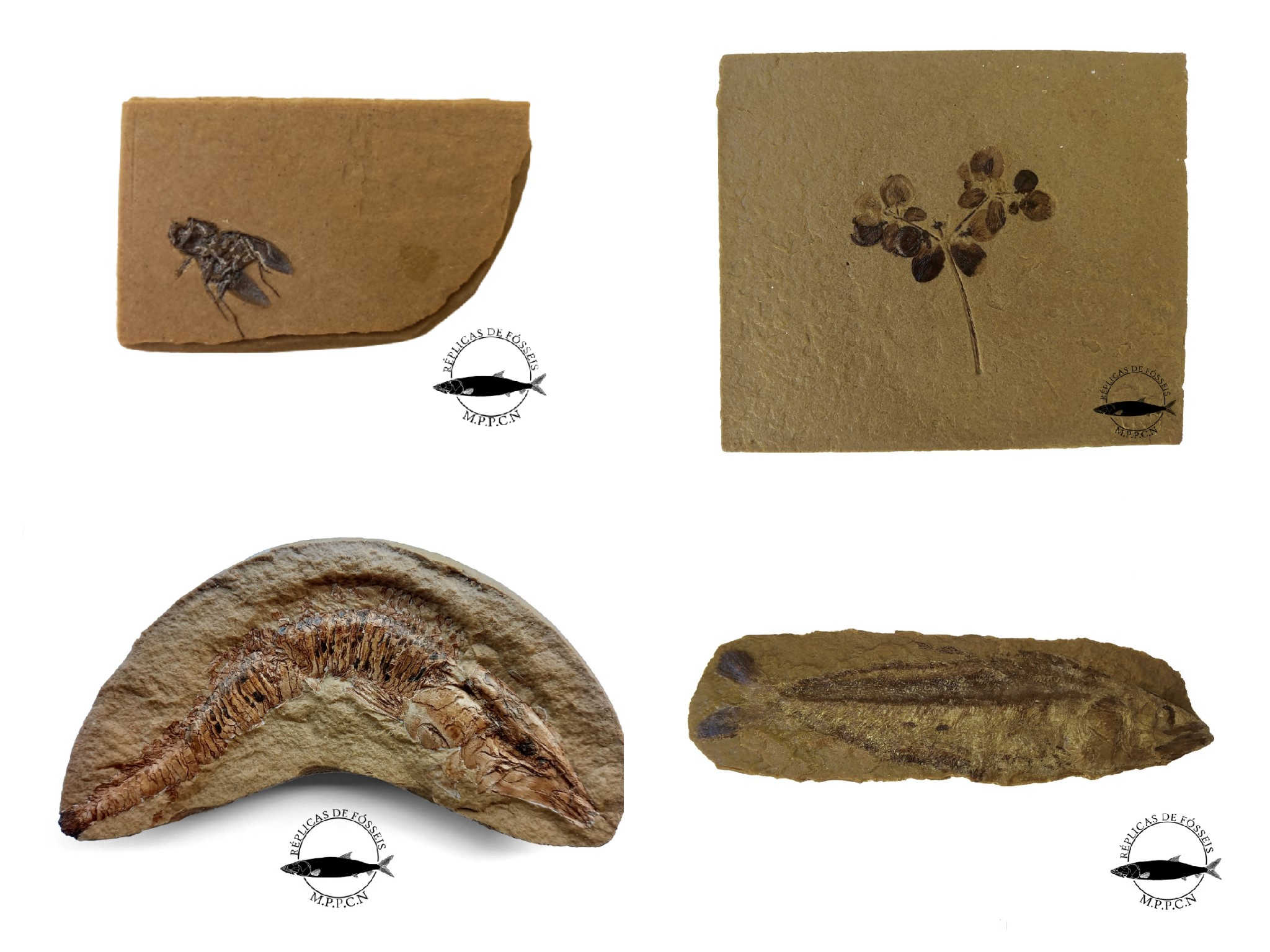 Réplicas de fósseis Museu de Paleontologia Plácido Cidade Nuvens